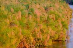 20160910 122 Okavango Sunset (scottdm) Tags: 2016 africa botswana intrepid okavango okavangopanhandle okavangoriver papyrus river september travel seronga northwestdistrict bw