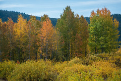 Fall Colors 4.jpg (JLA3 Photography) Tags: autumn usa landscapes grandtetonnationalpark wyoming