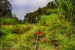 Binari dimenticati (Gianni Armano) Tags: binari dimenticati ferrovia vegetazione immagini foto gianni armano photo