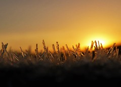 Cold and Frosty Morning..x (lisa@lethen) Tags: frost hoar sun sunrise early dawn weather nature macro