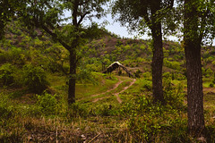 #Eplore_India #Yawal_National_Park_India #Maharashtra #Mountains  #hut #Jungle #Wildlife #beautyofNature (kedarbairagi) Tags: hut yawalnationalparkindia eploreindia maharashtra wildlife beautyofnature jungle mountains