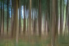 Nothing is more revealing than movement (Peter Jaspers) Tags: frompeterj 2016 olympus zuiko omd em10 1240mm28 natuurmonumenten kaapsebossen doorn nature naturereserve icm beweging movement trees hiking sliderssunday hss