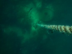 PA070703.jpg (Michael Bartosek) Tags: olympusepl3 catalinaisland olympus1442mm underwater catalina diving california pacificocean