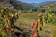Douro river valley (JOAO DE BARROS) Tags: barros douro river portugal joo landscape vineyards
