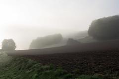 matin brumeux (rascal76160) Tags: saintaubinepinay brume brouillard fog prairie promenade champ matin