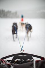 Dog Sleigh (Morten Falch Sortland) Tags: getty photomortenfalchsortland stock winter 2016 snow norway oslo dog dogs sleigh dogsleigh race hike ice fast action sports wanderlust tourism experienceaccentureaccenturediscoverybuskerudcountriesdogsleddogsleddingdogsleigheventsfornebugeiloholitfornebunorwayoslootherkeywordspeoplephotomortenfalchsortlandphotographerseasonssnowsportsstudentsthingstimewinter