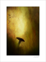 Once upon a time    I (Zino2009 (bob van den berg)) Tags: mushroom paddo pilze paddestoel texture color mood autumn herfst fall herbst warm brown gold single alone standing forest nature zino2009 bobvandenberg