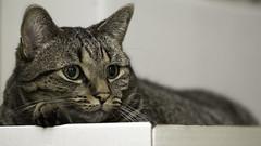 Chauncey box (wcwhiting) Tags: canon t3i cat cats felines idiot wcwhiting billwhiting 100mm28l 100mm28lmacro 100mm28macro 100mm ef100mmf28lisusmmacro billwhiing