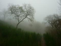 Ginsterweg (Jrg Paul Kaspari) Tags: tree fog landscape nebel landschaft baum ginster abre daun trb totenmaar trbe novemberstimmung schalkenmehren weinfeldermaar ginsterweg