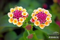 Flor 023