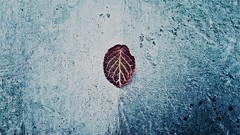 Natureza quase morta (biabnasci) Tags: blue red nature azul concrete leaf natureza vermelho folha morta concreto