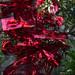 Trees_of_Loop_360_2014_119