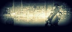No boleio da corda (Eduardo Amorim) Tags: brazil horses horse southamerica brasil caballo cheval caballos lazo kuh cow rind cattle cows ox ganado cavalos oxen mucca pferde cavalli cavallo cavalo gauchos pferd riograndedosul pampa bois khe vache vaca vacas campanha brsil vaches boi chevaux gaucho buey  lasso amricadosul mucche lao fronteira boeuf vieh gacho amriquedusud  gachos  boeufs buoi sudamrica rinder gado suramrica amricadelsur bueyes sdamerika mue pinheiromachado  bestiami btail americadelsud americameridionale campeiros campeiro