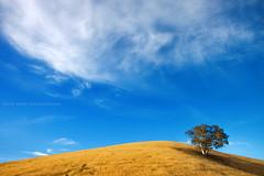 Golden Hills || KANIMBLA VALLEY || NSW (rhyspope) Tags: new blue summer sky orange mountain pope tree field yellow wales rural canon golden farm south fine meadow australia hills nsw aussie bathurst rhys oberon jenolan megalong 500d tarana kanimbla rhyspope