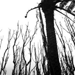 img867 (阿智) Tags: bw 120 6x6 film darkroom taiwan d76 黑白 fujiacros100 底片 暗房 沖片 rolleiflex35a