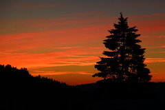Pinetree silhouette (Rogg4n) Tags: sunset shadow sky tree colors silhouette pinetree pine switzerland colorful swiss fir saignelgier franchesmontagnes