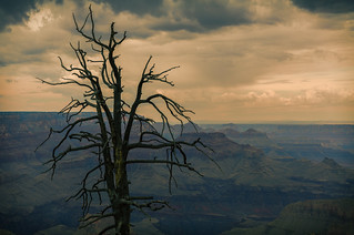 Lone Tree above the Grand Canyon