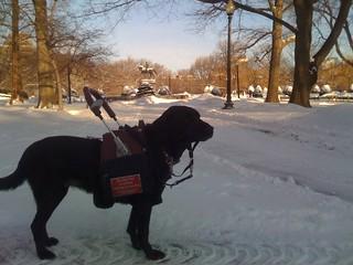 adele snow 2