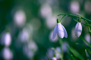 Fleur d'hiver - Explore (12/02/2015)