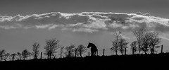 Horse on the hill. (CWhatPhotos) Tags: pictures above county blue trees sky horses horse cloud white 3 black cold tree monochrome weather animal silhouette clouds canon fence that photography mono evening spring day skies foto durham image artistic cloudy pics mark walk iii picture silhouettes pic images have photographs photograph fotos fields 5d about dslr which tops silhouetted mk contain sacriston cwhatphotos