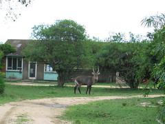 Antelope QENP