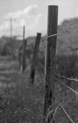 Barbed Wire Fence (Leicaflex SL, 90mm Elmarit) (PositiveAboutNegatives) Tags: leica bw film fence sl barbedwire 90mm coolscan leicaflex foma elmarit leitz fomapan200 leicar leicaflexsl 90mmelmarit nikon9000scanner blackandwhitefilmphotography leicafilmphotography freefilmimages freefilmpictures