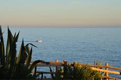 Sailing to the setting sun (angelsgermain) Tags: winter light sunset sea sky plant boat mediterranean sailing catalonia catalunya agave banister costabrava calelladepalafrugell baixempordà