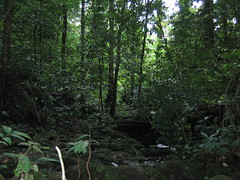 Pristine Primary Rainforest in Borneo