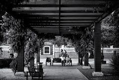 Untitled (isagsr) Tags: park old parque summer people blackandwhite bw plants byn bench peace gente columns banco symmetry verano ancianos columnas simetra monocromtico canoneos550d