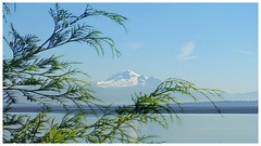 Mount Baker (Brenda Boisvert) Tags: mountbaker mountain ocean pacific peaceful tree branches cedar layered bluesky bc canada calm waters ngc npc