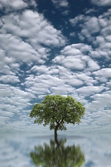 Heavenly Tree (Carlos Gotay Martnez) Tags: sky landscape lake beauty water reflection nature blue sun clouds tree abstract summer beautiful green surreal fineart minimalist serenity peacefulness