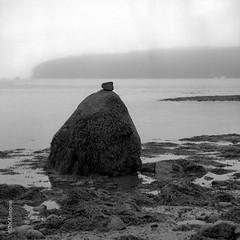 Untitled (DKAIOG) Tags: 6x6 film monochrome mediumformat blackwhite hasselblad500cm fujiacros100 pyrocatmc