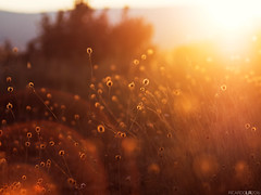 Hot days (Photographordie) Tags: atardecer sunset hot summer verano flare sun sol sunlight vivitarseries1macro90mmf25 olympuspenepm2 mirrorless microfourthirds microcuatrotercios m43 90mm 25 bokeh light field campo beautyinnature luz