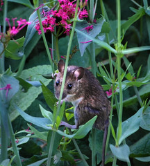 encounter... (All Shine) Tags: nature animals mouse funny