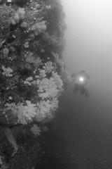 20160803-Eyemouth5 (Dacmirc) Tags: eyemouth diving ukdiving rebreather