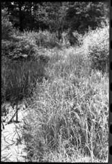 More Nature Stuff (Malinku) Tags: mamiya mamiyadtl2000 nature film filmcamera fuji fujifilm fujineopan fujineopan400 landscape