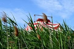 Encore un peu de spectacle (Bluefab) Tags: cirque chapiteau plumeaux verdure champ ciel nuages rouge rayures montage spectacle roseaux