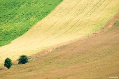 26072016-DSC_0032 (vidjanma) Tags: courbes vallons sensualit nature