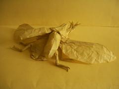 Kabutomushi - Shuki Kato (Marcos Origami) Tags: insects beetle origami bug samurai kabutomushi shuki kato