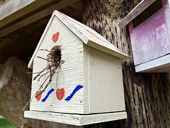 Who Goes There? (glantine) Tags: birdhouse cabanedoiseaux birdnest niddoiseau housewren troglodyte branchelettes sizeperception twigs