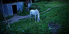 Horse in blues (gabri tropea) Tags: cavallo horse bucolic blues varallo piemonte