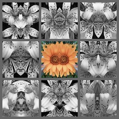 Lily's Many Faces (Mystical Spirit Studio) Tags: faces blackandwhite flower mirrorimage poetry lily