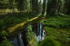 Fort humide (Samuel Raison) Tags: finlande finland tourbire barbecue mkki mkkilife fort nikon nikond3 nikon41635mmafsgvr