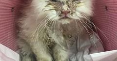 The story of a cat called Jon Snow via http://ift.tt/29KELz0 (dozhub) Tags: cat kitty kitten cute funny aww adorable cats