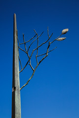 Lone Tree (AFracturedCrown) Tags: 52project2016 lightbox lonetree artwork sculpture blue