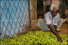 Lime.  Colombo (Claire Pismont) Tags: asia asie srilanka clairepismont pismont colorful couleur color colour colombo lime market fruit lemon documentory travel travelphotography travelshot