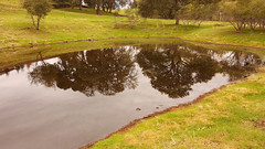 Valley Oak Pond Reflections (oldhiker111) Tags: valleyoak quercuslobata pond reflection samsung galaxy s6