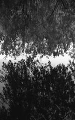Reflection (Nils Kristofer Gustafsson) Tags: blackandwhite bnw ishootfilm retro rollei 400s lomo lomography sweden rebro keepfilmalive filmisnotdead filmphotography film rodina adonal yashica electro cc 35mm