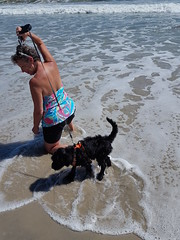 Gabby's Beach Adventure (crisp4dogs) Tags: gabby pwd portuguesewaterdog puppy beach crisp4dogs beth water