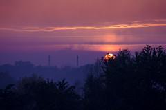 1/365 (aherus_) Tags: outdoor dusk tree nikon dx d5100 sky sunset